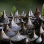 Thorny Landscape - Alison Lomax