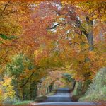 13 Autumn Road Mike Gray