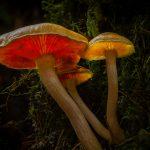 79 Glowing fungi Fiona Kilgour