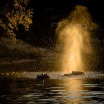 90 Hippos and the Golden Blow David Graham
