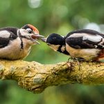 Best Nature Feeding time - Fiona Kilgour